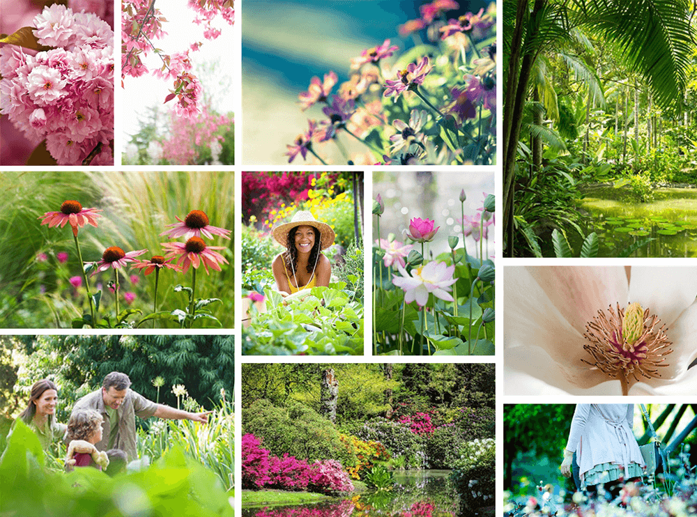 branding projects brooklyn-botanic-garden-nyc-imagery-logo-design-branding-flower-plants
