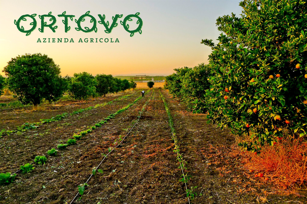 branding projects ortovo-logo-design-branding-sicilia-biologico2