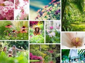 brooklyn-botanic-garden-nyc-fotografia-logo-design-branding-brooklyn-botanic-garden-nyc-brochure-catalogo-logo-design-branding-flores-plantas-barcelona