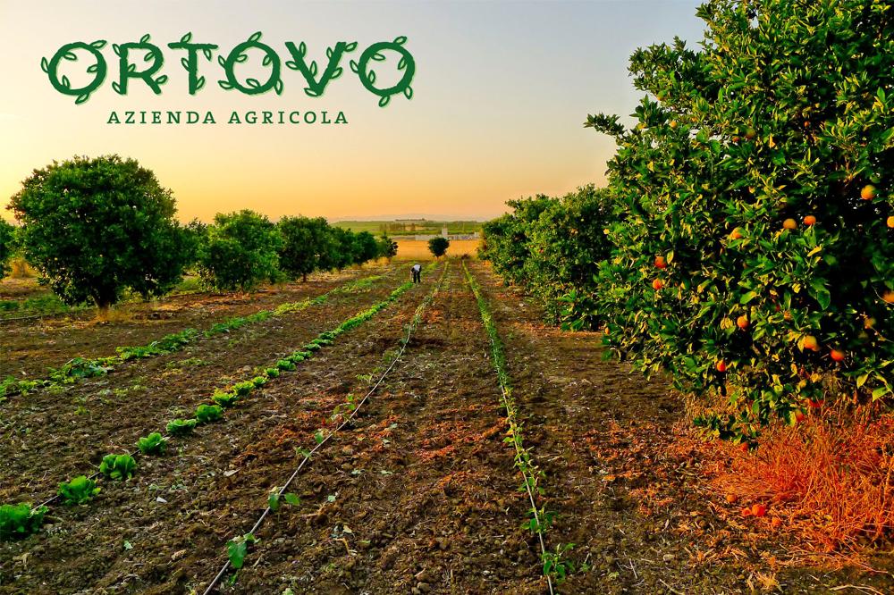 catania-ortovo-logo-branding-sicilia-prodotti-biologici-graphic-design-grafica-orto